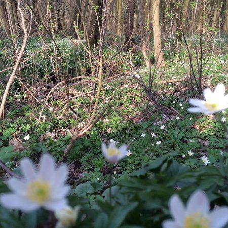 Natur in Sachsen